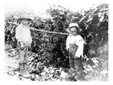 Boys with Grapes  Granger  WA  1911