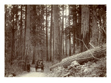 Road Cut Through Dense Trees Near Longmire Springs  Pierce County  WA  1898