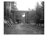 Stage Entering Mount Rainier National Park  1911