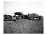 Stacking Hay  Ellensburg  1916
