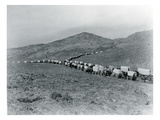 Wagon Train - Oregon Trail Wagon Train Reenactment  1935