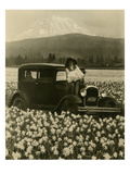 Daffodil Field  Automobile and Mount Rainier  ca 1929