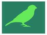 Light Green Bird