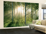 Birch Glory Huge Wall Mural Poster Print
