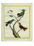 Antillean Crested Hummingbird  Golden-Throated Hummingbird and Green-Throated Carib Hummingbird