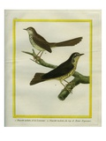 Speckled Warbler and Spotted Bush Warbler
