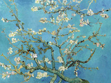 Branches d'amandier en fleurs, Saint-Rémy, 1890 Reproduction d'art par Vincent Van Gogh