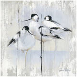 3 Oiseaux