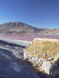 Laguna Colorada on the Altiplano  Potosi Department  Bolivia