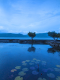 Indonesia  Sumatra  Samosir Island  Lake Toba  Tuk Tuk  Water Lilie Pond at Hotel Silitong