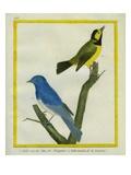 Palawan Blue Flycatcher and Yellow-Bellied Flycatcher
