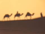Camel Train Shadows  Erg Chebbi  Sahara Desert  Morocco