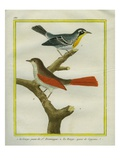 Common Yellowthroat and Redwing