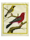 Pine Grosbeak and Evening Grosbeak
