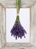 Lavender Hanging Up to Dry