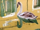Swan  Burano  Veneto Region  Italy