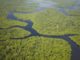 Aerial View of Amazon Rainforest and Tributary of Rio Negro  Manaus  Amazonas  Brazil