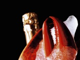 Lobster Claw  Champagne Bottle Behind  Close-Up