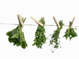 Herbs Drying on a Washing Line