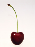A Cherry Against a White Background