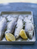 Fresh Trout with Lemon and Parsley  Ready for Grilling