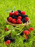 Fresh Raspberries and Blackberries in a Basket