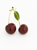 A Pair of Cherries with Stalks and Leaf