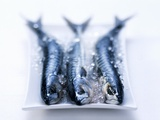 Three Mackerels on a Plate with Crushed Ice