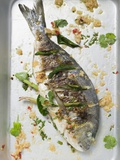 Roasted Gilthead Bream with Lemon Grass and Coriander Leaves