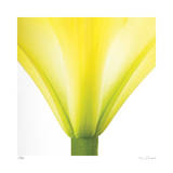 Yellow Green Lily Abstract No 338