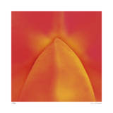 Orange Red Orchid Abstract