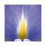Blue Iris Abstract No 2
