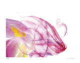 Purple Tulip Abstract No 128