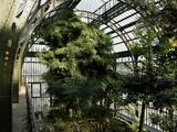 Museum National d'Histoire Naturelle  Jardin des Plantes (Botanical Gardens)  Paris  France