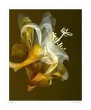 Epiphyllum 4