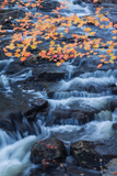 Fall Color and Flowing Brook Design