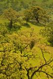 Diablo Trees
