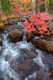 Autumn Stream Through Acadia