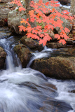 Autumn Stream & Color