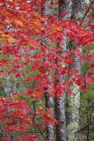 Autumn Design New England