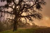 Late Afternoon Sun & Fog - Mount Diablo