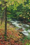 Early Fall Stream  Catskills