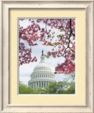 United States Capitol Dome in Washington  DC and Flowering Spring Trees