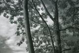 Kauai Tree Pattern