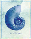 Nautilus Shell B