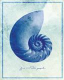 Nautilus Shell B