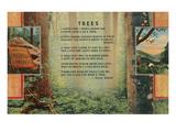 Kilmer Tree Poem  Forest