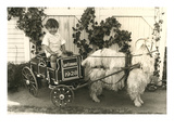 Little Boy in Goat Cart