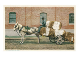 Cotton Cart Pulled by Horse