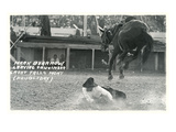 Cowboy Bucked Off Bronco  Montana
